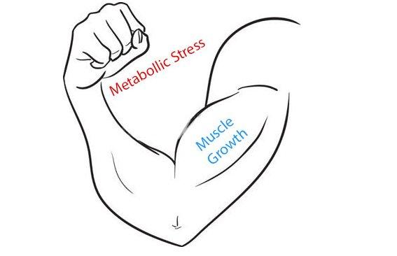 metabollic-stress-spieren